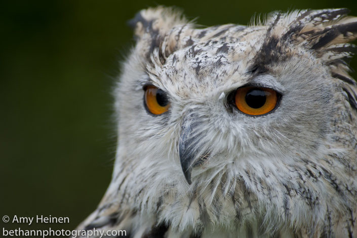 New Forest Birds of Prey