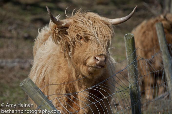 Ardnamurchan Scotland